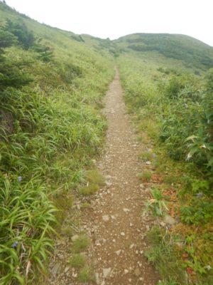 笹原の尾根道