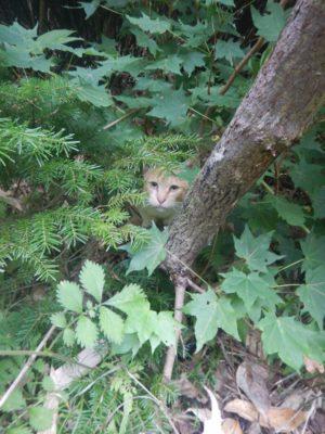 礼文島の猫