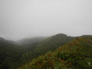 霧の礼文島