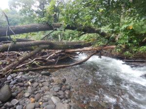 川を塞ぐ倒木